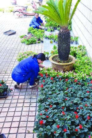 德兴铜矿用采花卉装扮矿区