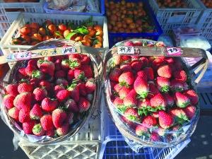 """草莓""""红""""起来"""