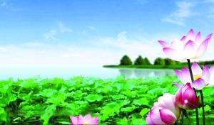 """荷香满塘又一村  ——义门村依托""""美丽经济""""壮大集体经济"""
