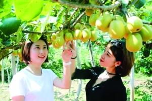 8月26日,去上饶县应家乡品尝甜蜜 多汁的