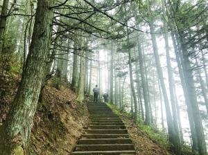 武夷山中云生烟
