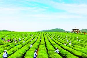农业产业振兴助推乡村振兴