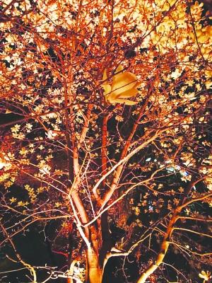春浓花娇夜色美