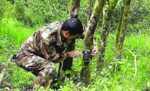 武夷山保护区:红外相机拍到全球濒危物种黑麂
