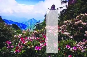 """""""中国旅游日?#38381;?#37324;活动多多  花季一起乐游""""花样""""三清山"""