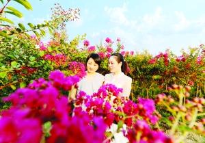 萬年縣紫薇花吸引了眾多市民觀光