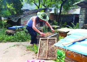 【暖新闻·江西2019】贫困户身残志坚养蜂 帮扶单位倾情助力销蜂蜜
